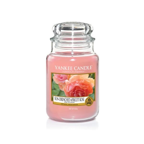 CANDELA GIARA GRANDE SUN-DRENCHED APRICOT ROSE